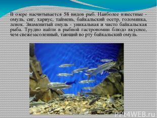 В озере насчитывается 58 видов рыб. Наиболее известные - омуль, сиг, хариус, тай
