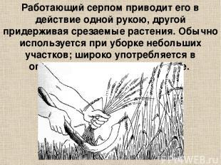 Работающий серпом приводит его в действие одной рукою, другой придерживая срезае