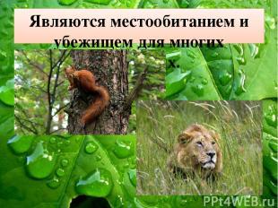 Являются местообитанием и убежищем для многих животных.