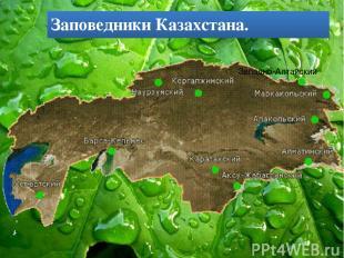 Западно-Алтайский Заповедники Казахстана.