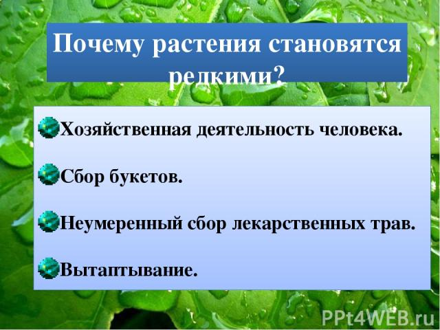 Почему растения становятся редкими? Хозяйственная деятельность человека. Сбор букетов. Неумеренный сбор лекарственных трав. Вытаптывание.