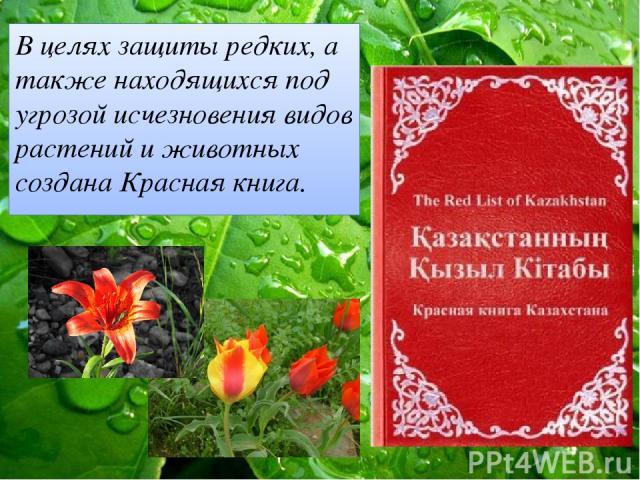 В целях защиты редких, а также находящихся под угрозой исчезновения видов растений и животных создана Красная книга.