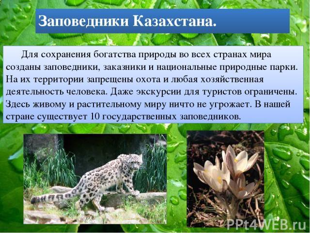 Заповедники Казахстана. Для сохранения богатства природы во всех странах мира созданы заповедники, заказники и национальные природные парки. На их территории запрещены охота и любая хозяйственная деятельность человека. Даже экскурсии для туристов ог…