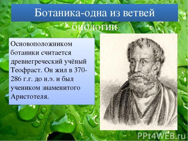Ботаника-одна из ветвей биологии Основоположником ботаники считается древнегреческий учёный Теофраст. Он жил в 370-286 г.г. до н.э. и был учеником знаменитого Аристотеля.