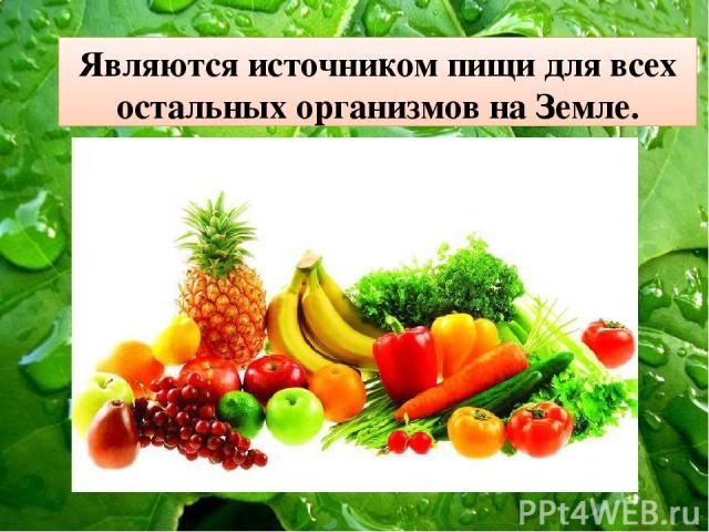 Являются источником пищи для всех остальных организмов на Земле.