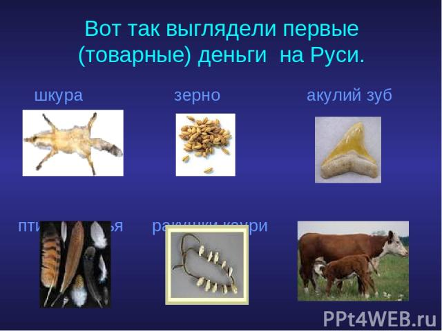 Вот так выглядели первые (товарные) деньги на Руси. шкура зерно акулий зуб птичьи перья ракушки каури скот