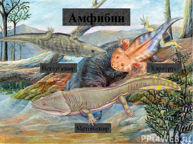 Плиозавры Симолест Плиозавр Лептоклейд Криптоклид