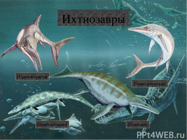 Мозазавры Горониозавр Мозазавр Тилозавр Прогнатодон