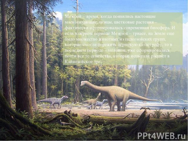Мезозой – время, когда появились настоящие млекопитающие, птицы, цветковые растения – фактически сформировалась современная биосфера. И если в первом периоде Мезозоя – триасе, на Земле еще было множество животных из палеозойских групп, которые смогл…