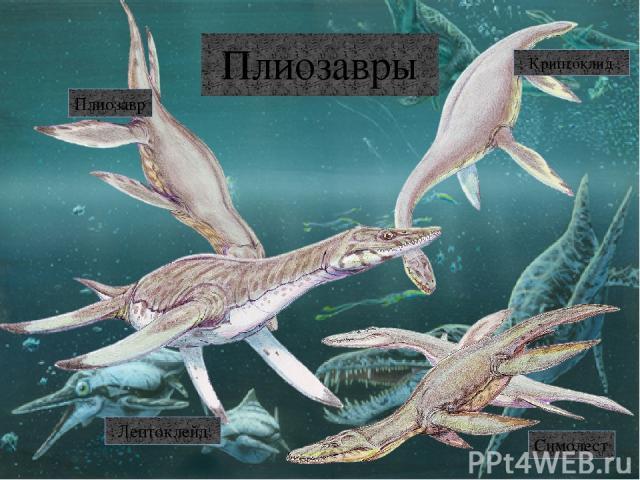 Птерозавры Талассодромеус Тапежара Нуктозавр Доринатус Сордес Орнитохейрус