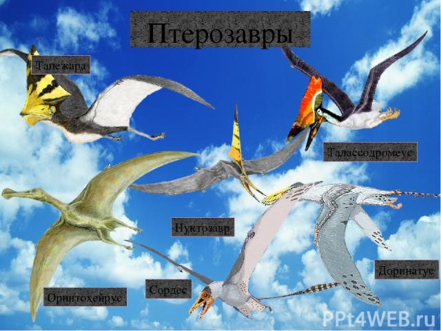 Динозавры Алиорами Гигантозавр Криптопс Мазиаказавр Тираннозавр Альбертозавр