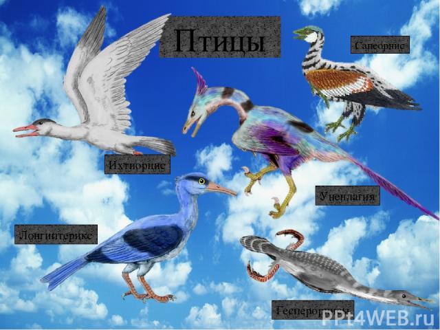 Стегозавр Эвоплоцефал Брахиозавр Трицератопс Гандрозавр Эдмонтония Паразауролоф