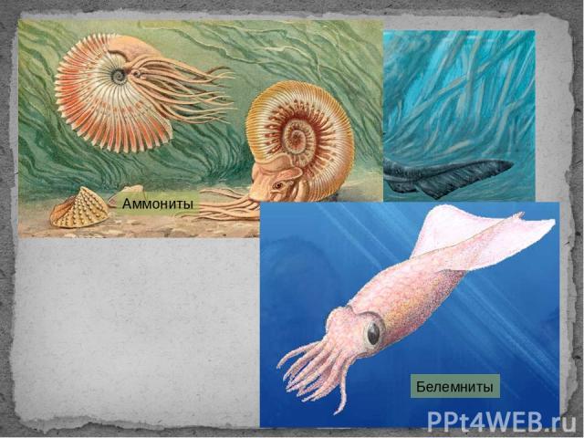 Плезиозавр Аммониты Белемниты