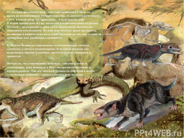 От ящериц произошли змеи – они тоже появились в Мезозое, - время их возникновение в общем известно, но палеонтологи спорят о том, в какой среде это произошло – в воде или на суше. В морях процветали акулы, жили они и в пресноводных водоемах. Мезозо…