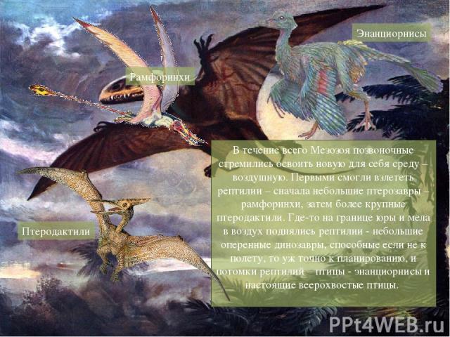 В течение всего Мезозоя позвоночные стремились освоить новую для себя среду – воздушную. Первыми смогли взлететь рептилии – сначала небольшие птерозавры – рамфоринхи, затем более крупные птеродактили. Где-то на границе юры и мела в воздух поднялись …