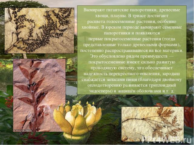 Вымирают гигантские папоротники, древесные хвощи, плауны. В триасе достигают расцветаголосеменные растения, особенно хвойные. В юрском периоде вымирают семенные папоротники и появляются первыепокрытосеменные растения(тогда представленные только д…