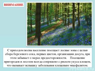 С приходом весны население посещает лесные зоны с целью сбора березового сока, п