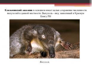 Клязьминский заказникв основном имеет целью сохранение численности выхухолей в