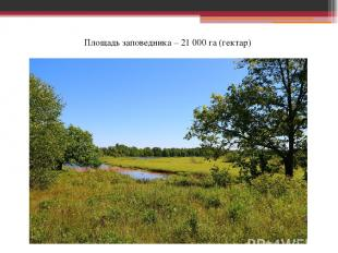 Площадь заповедника – 21 000 га (гектар)