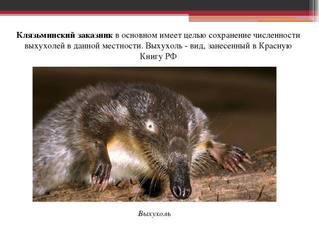Клязьминский заказникв основном имеет целью сохранение численности выхухолей в данной местности. Выхухоль - вид, занесенный в Красную Книгу РФ Выхухоль