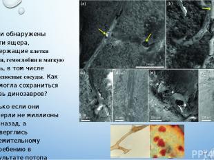 Были обнаружены кости ящера, содержащие клетки крови, гемоглобин и мягкую ткань,