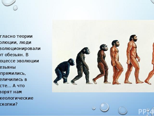 Согласно теории эволюции, люди «эволюционировали» от обезьян. В процессе эволюции обезьяны выпрямились, увеличились в росте… А что говорят нам археологические раскопки?