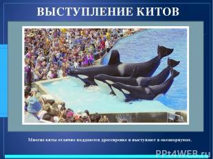 ВЫСТУПЛЕНИЕ КИТОВ Многие киты отлично поддаются дрессировке и выступают в океана
