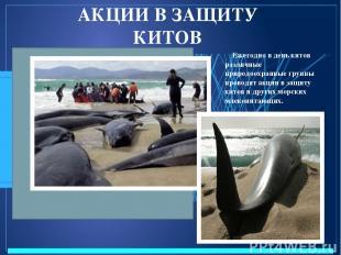 АКЦИИ В ЗАЩИТУ КИТОВ Ежегодно в день китов различные природоохранные группы пров