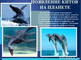 ПОЯВЛЕНИЕ КИТОВ НА ПЛАНЕТЕ Находки палеонтологов подтверждают существование кито