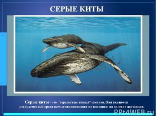 """СЕРЫЕ КИТЫ Серые киты - это """"перелетные птицы"""" океанов. Они являются рекордсмена"""