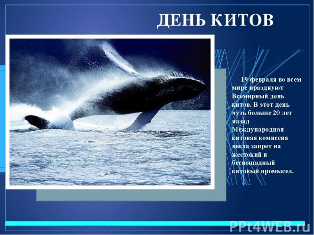 ДЕНЬ КИТОВ 19 февраля во всем мире празднуют Всемирный день китов. В этот день чуть больше 20 лет назад Международная китовая комиссия ввела запрет на жестокий и беспощадный китовый промысел.