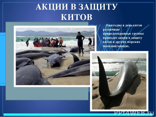 АКЦИИ В ЗАЩИТУ КИТОВ Ежегодно в день китов различные природоохранные группы проводят акции в защиту китов и других морских млекопитающих.