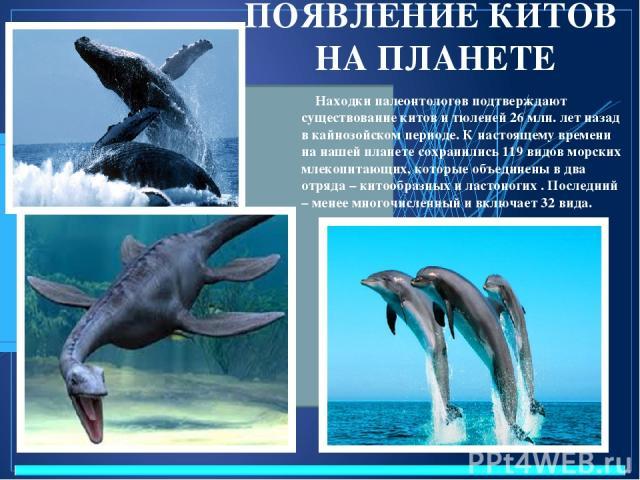 ПОЯВЛЕНИЕ КИТОВ НА ПЛАНЕТЕ Находки палеонтологов подтверждают существование китов и тюленей 26 млн. лет назад в кайнозойском периоде. К настоящему времени на нашей планете сохранились 119 видов морских млекопитающих, которые объединены в два отряда …
