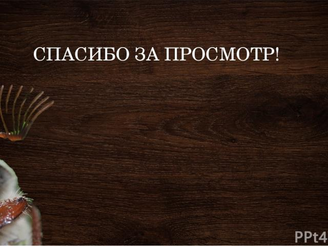 СПАСИБО ЗА ПРОСМОТР!