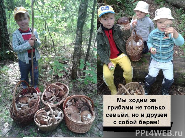 Мы ходим за грибами не только семьёй, но и друзей с собой берем!