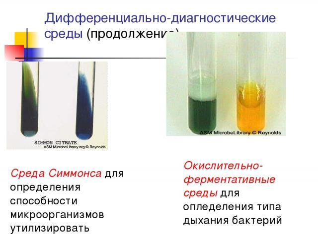 Дифференциально-диагностические среды (продолжение) Окислительно-ферментативные среды для опледеления типа дыхания бактерий Среда Симмонса для определения способности микроорганизмов утилизировать цитраты