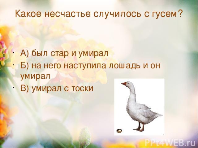 Какое несчастье случилось с гусем? А) был стар и умирал Б) на него наступила лошадь и он умирал В) умирал с тоски