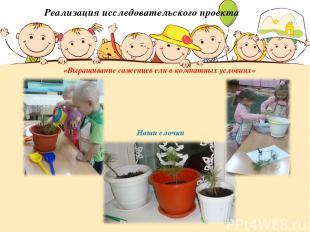 Реализация исследовательского проекта «Выращивание саженцев ели в комнатных усло