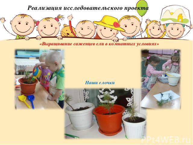 Реализация исследовательского проекта «Выращивание саженцев ели в комнатных условиях» Наши елочки