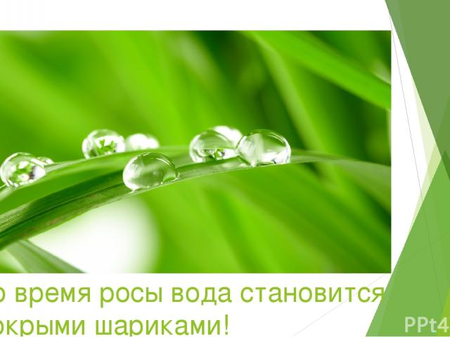 Во время росы вода становится мокрыми шариками!