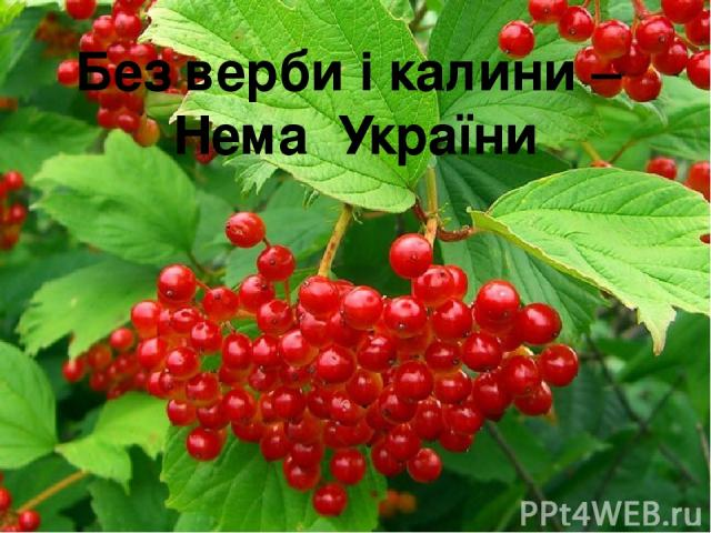 Без верби і калини – Нема України