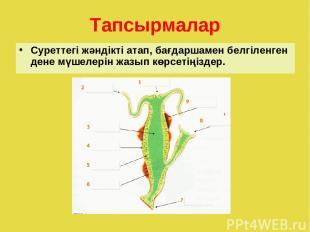 Тапсырмалар Суреттегі жәндікті атап, бағдаршамен белгіленген дене мүшелерін жазы