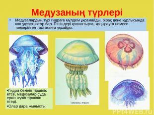 Медузаның түрлері Медузалардың түрі гидраға мүлдем ұқсамайды, бірақ дене құрлысы