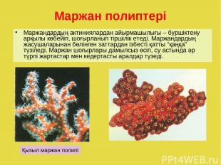 Маржан полиптері Маржандардың актиниялардан айырмашылығы – бүршіктену арқылы көб