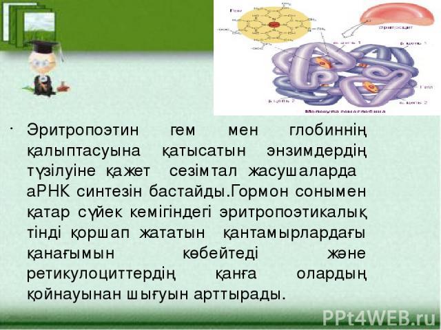 Эритропоэтин гем мен глобиннің қалыптасуына қатысатын энзимдердің түзілуіне қажет сезімтал жасушаларда аРНК синтезін бастайды.Гормон сонымен қатар сүйек кемігіндегі эритропоэтикалық тінді қоршап жататын қантамырлардағы қанағымын көбейтеді және ретик…