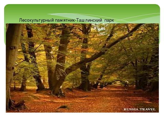 Лесокультурный памятник-Ташлинский парк Тимашева,
