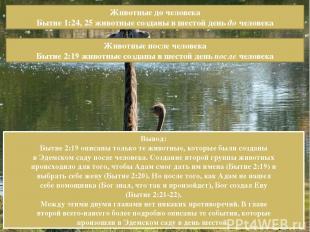 Животные до человека Бытие 1:24, 25 животные созданы в шестой день до человека Ж