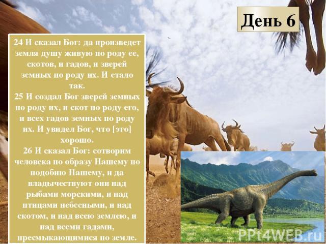 День 6 24 И сказал Бог: да произведет земля душу живую по роду ее, скотов, и гадов, и зверей земных по роду их. И стало так. 25 И создал Бог зверей земных по роду их, и скот по роду его, и всех гадов земных по роду их. И увидел Бог, что [это] хорошо…
