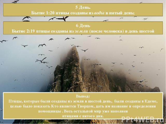 5 День. Бытие 1:20 птицы созданы из воды в пятый день; 6 День Бытие 2:19 птицы созданы из земли (после человека) в день шестой Вывод: Птицы, которые были созданы из земли в шестой день, были созданы в Едеме, целью было показать Кто является Творцом,…