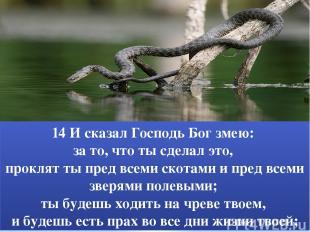 14 И сказал Господь Бог змею: за то, что ты сделал это, проклят ты пред всеми ск